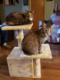 Catly Towers