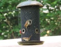 My Bird Feeder