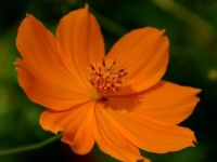 4  ~  'Awesome in Orange'