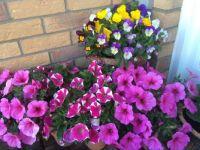 Flowers at my door