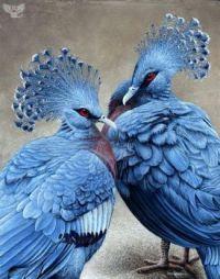Beautiful Birds - No 34