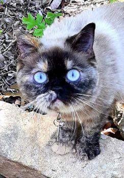 Suzie Q with eyes so blue.