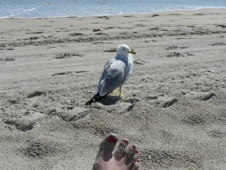 Friendly gull at Boca Raton, Fl.