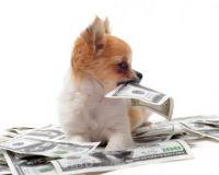 puppywithmoney