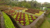 Garden in Madeira