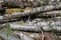 The Log-pile at Moyle