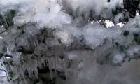Ice blooms