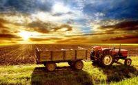 Spring farm Friday
