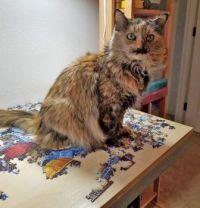 Heidi Our Puzzle Assistant