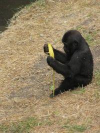 Zoo #11 -- that sweet baby again
