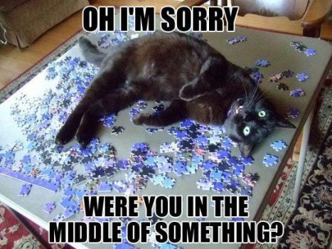 Your Cat and Your Puzzle