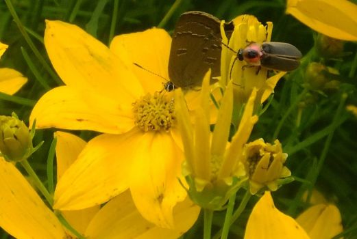 A firefly and a butterfly
