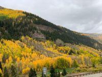 Aspens in fall South Dakota