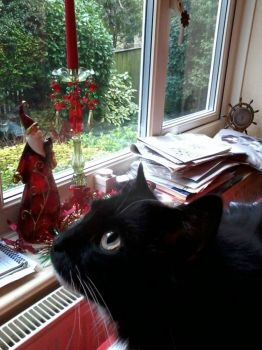 Beautiful Boy in the clutter at Xmas 2012