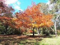 Autumn in the Blue Mountains, Australia