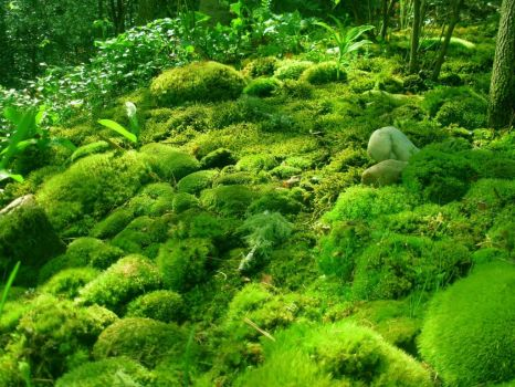 Green carpet moss