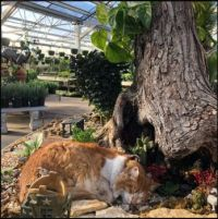 Local plant shop cat takes a snooze in fairy garden