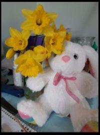 ~Fresh Daffodills~