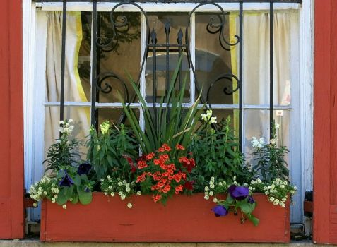 Window Box of Flowers in Charleston
