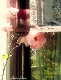Secret Garden Rose