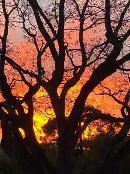 tonight's stunning sunset