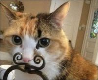 Funny picture of a kitty with a 'moustache'