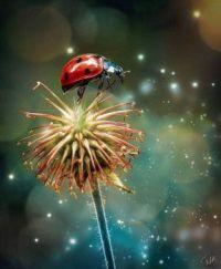 I love Lady Bugs