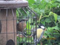 New visitor to the feeders meets the neighbours