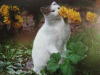 smelling the flower