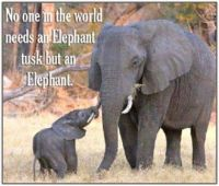 Elephants Need to Be Protected