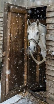 Pretty horse watching the snow fall!