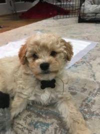 Brand New Puppy!
