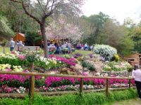 Spring Bluff - Toowoomba Carnival of Flowers
