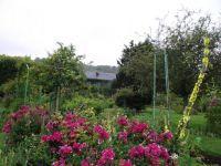 Garden in Kent