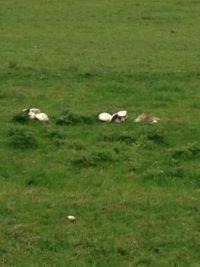 mushrooms 004