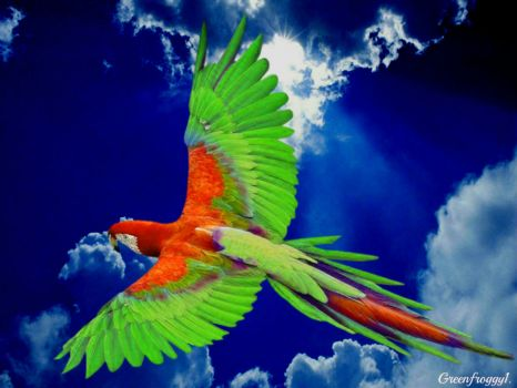 Green and Red Macaw by Green Froggy1
