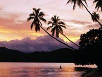 palm-tree-fiji_26301_600x450