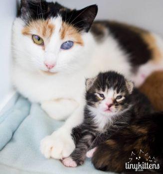 Pray for sweet mama cat Skye