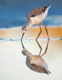 Mooie weerspiegeling!
