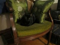 Her Royal Highness Lady Polo on her emerald throne