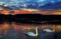 Doug Clement Photography Esquimalt sunset