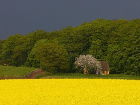 """Yellow and Green"" by Jeppe"