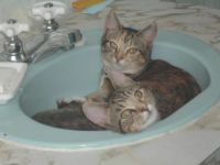 bath time for puss and boots