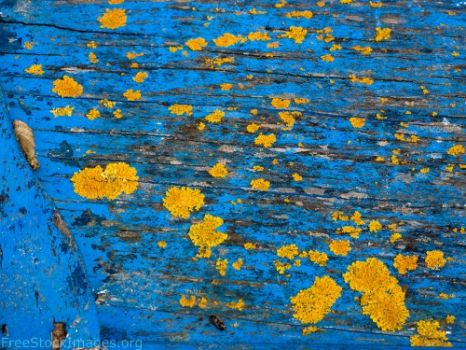 Yellow Mould on a Blue Wooden Thing?