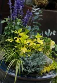 Beautiful Container Garden.