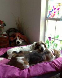 2 lazy dogs