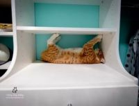 I'll just hold this shelf up whilst I sleep