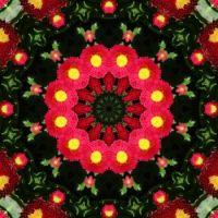 kaleidoscope 324 more pink daisies very large