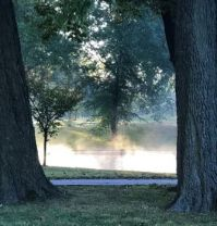 Early Morning Mist, Willmore Park