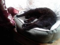 Raven is oh, so comfy!